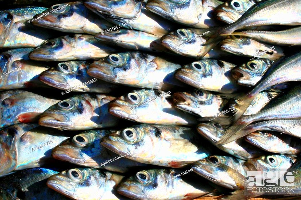 Stock Photo: Fish in market. Agadir  Morocco.