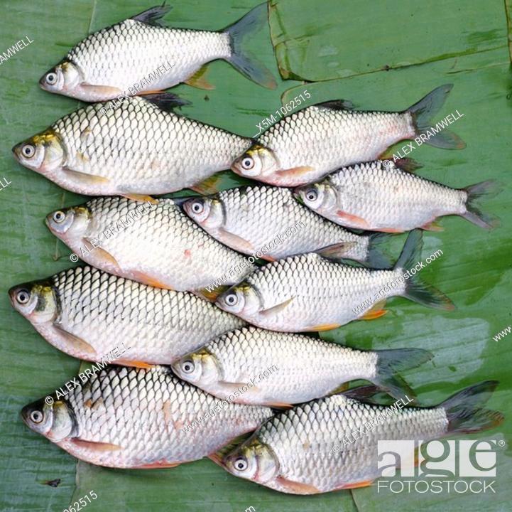 Stock Photo: Freshwater fish on sale in Luang Prabang Market, Laos.