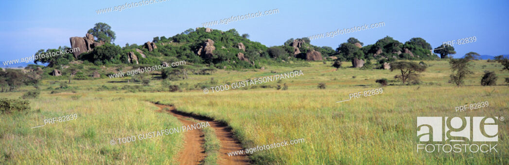 Stock Photo: Simba Kopjes and Road Serengeti Tanzania Africa.