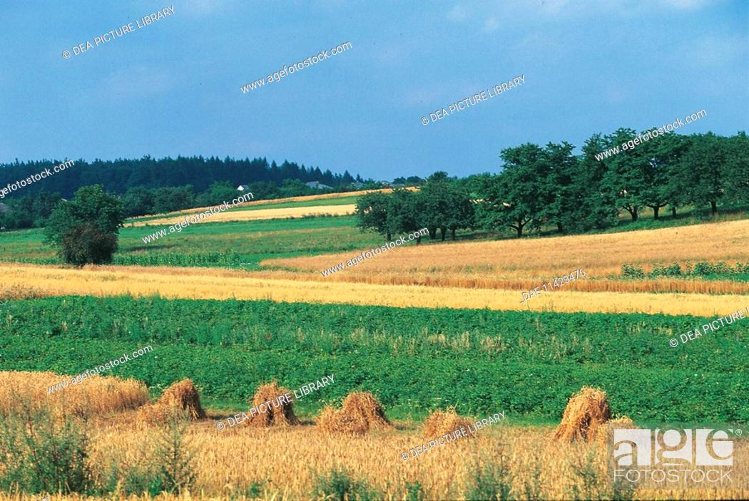 Stock Photo: Poland - Agricultural landscape between Ojcow and Pieskowa Skala.