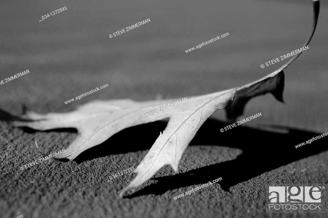 Stock Photo: Solo Fallen Leaf.