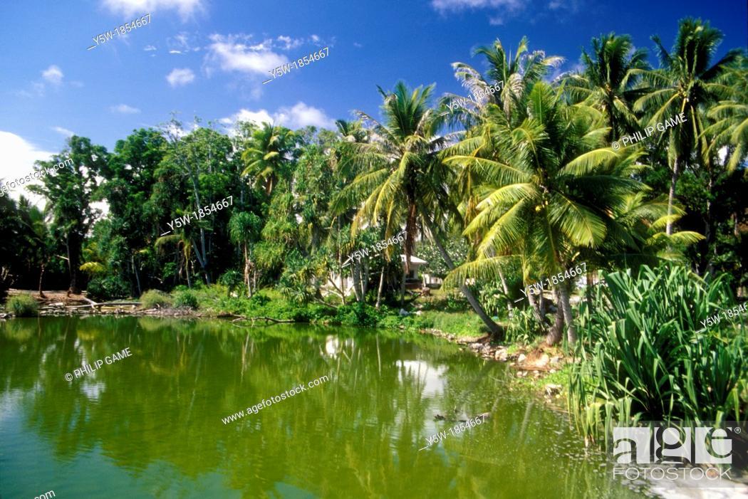 Stock Photo: Coconut palms, pandanus and frangipani line the road beside Buada Lagoon, Nauru's only inland community.
