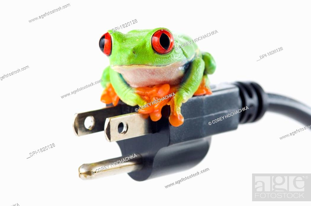 Stock Photo: Red eyed tree frog on electrical cord.
