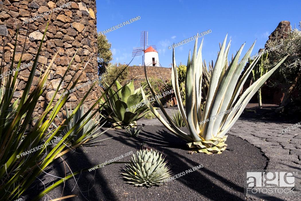 Stock Photo: The cactus garden project of César Manrique. Guatiza, Lanzarote. Spagna.