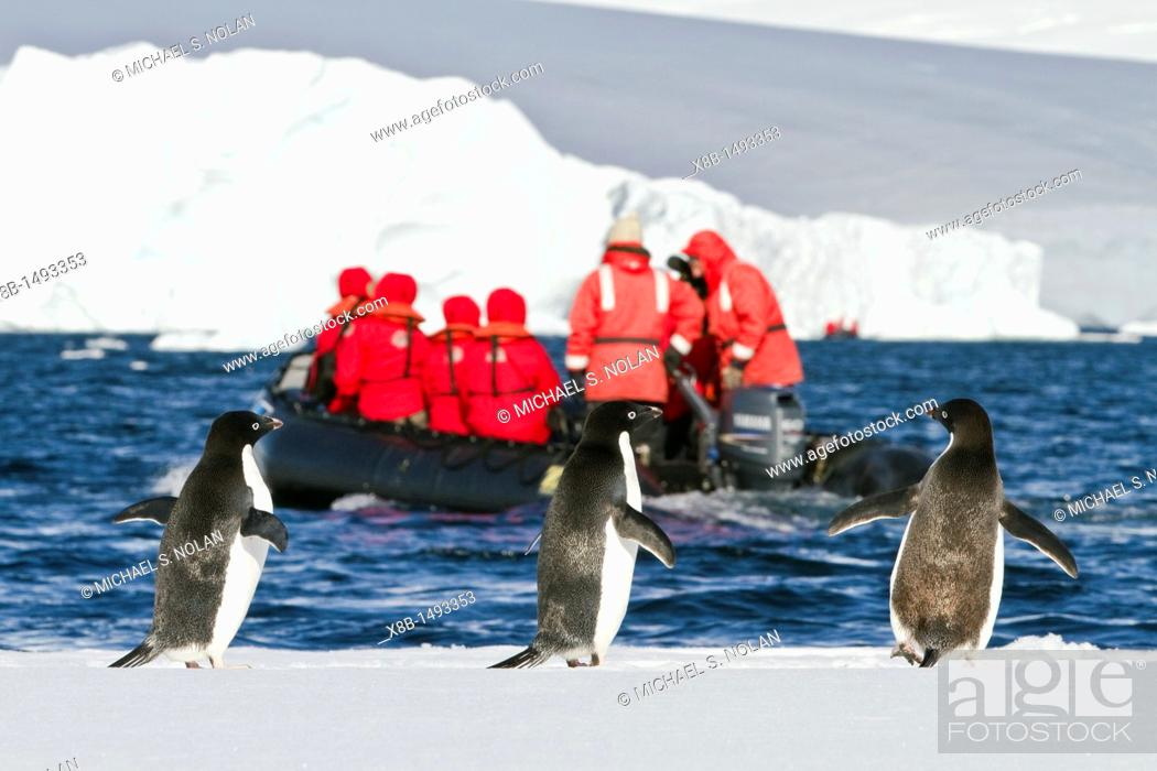 Imagen: Adélie penguins Pygoscelis adeliae on ice with Lindblad guests, Antarctica  MORE INFO The Adélie penguin is one of the southernmost breeding seabirds in all of.