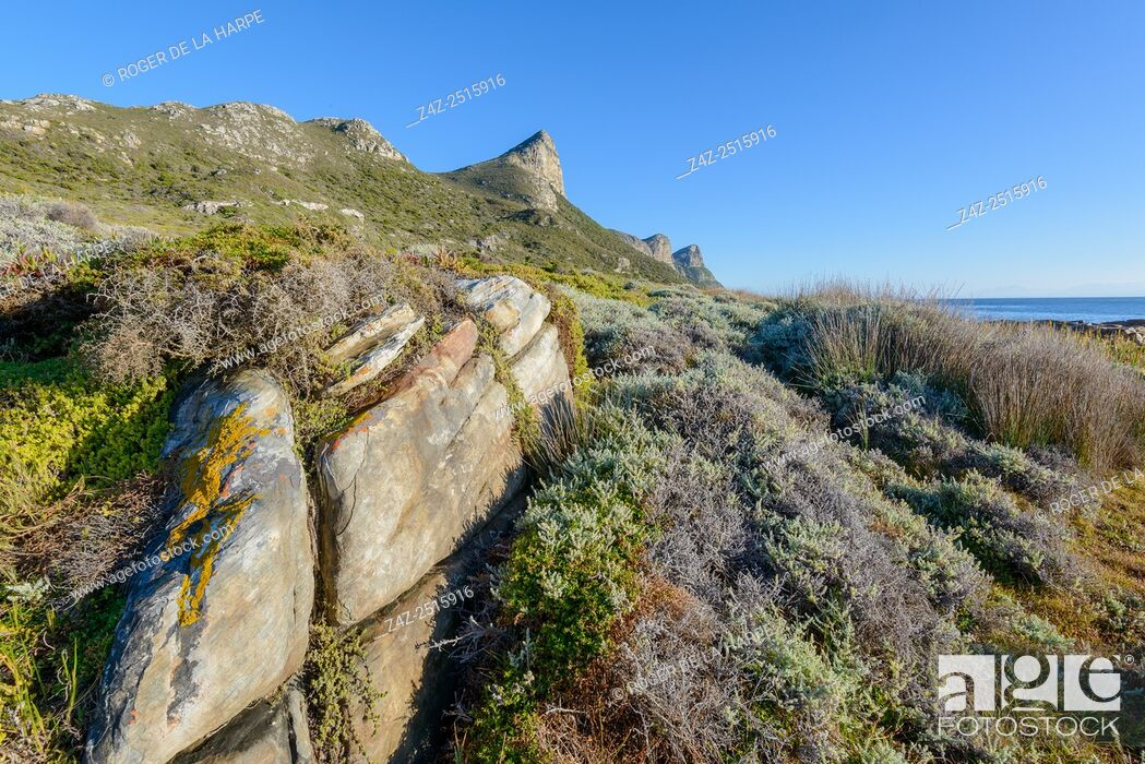 Imagen: View of Pauls Rock from Booi se Skerm near Buffels Bay. Cape Point Nature Reserve. Table Mountain National Park. Cape Town. Western Cape. South Africa.