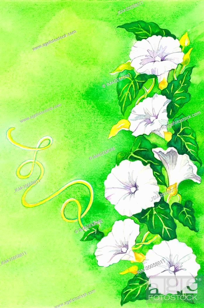 Stock Photo: Flower, Watercolor painting of petunia.