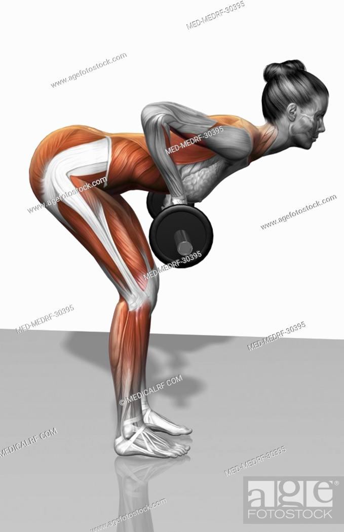 Stock Photo: Barbell bent over row exercises Part 1 of 2.