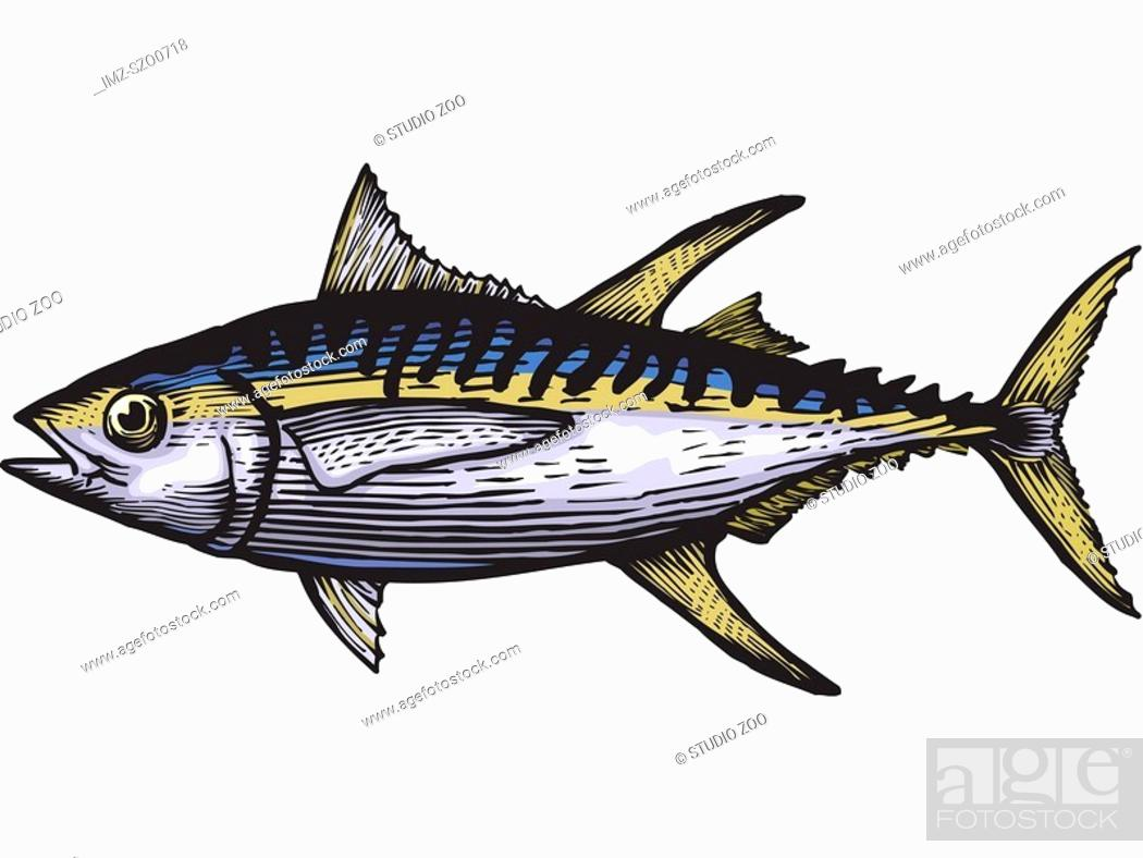 Stock Photo: A drawing of a yellow fin tuna.