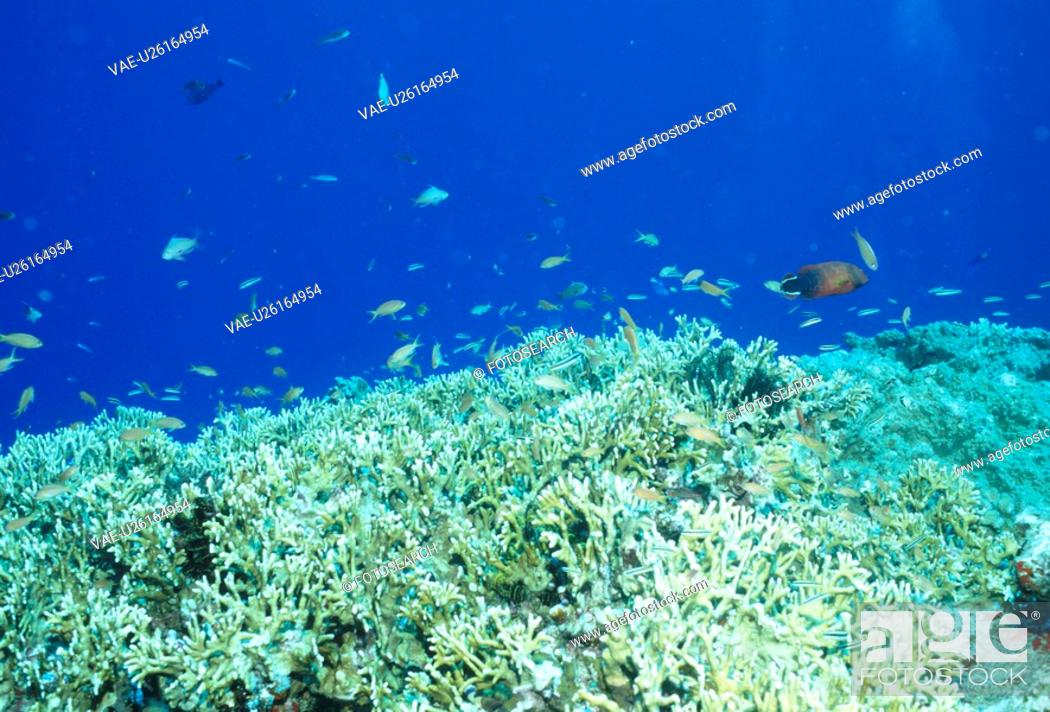 Stock Photo: Coral And Tropical Fish.