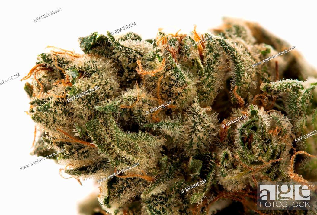 The cannabis strain SuperGlue is a Sativa dominant cross of Gorilla
