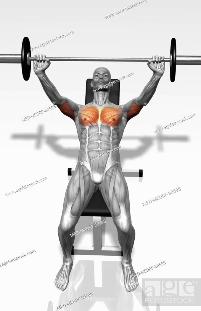 Stock Photo: Bench press incline Part 1 of 2.