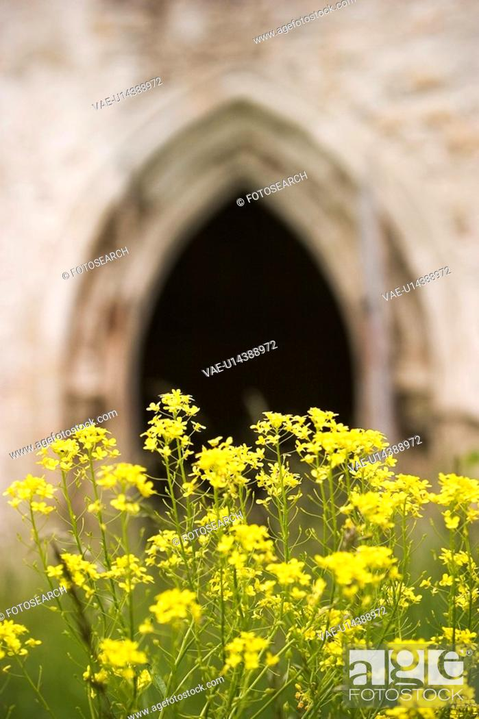 Stock Photo: Close-Up, Day, Outdoors.