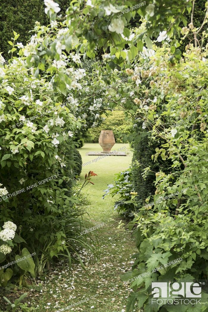 Imagen: Terracotta urn vista through a fragrant archway of orange blossom flowers in the grounds of The Grange, Frampton on Severn, the Cotswolds, England.