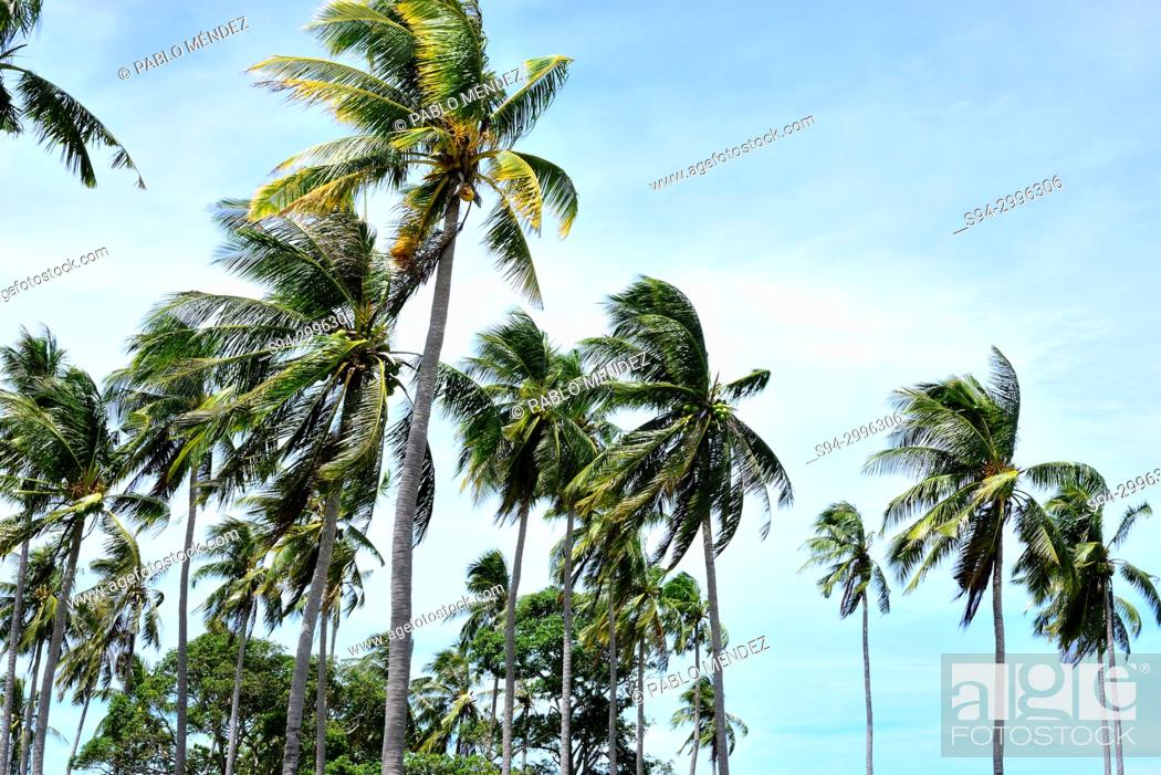 Stock Photo: Palm trees in Koh Tonsay or Rabbit island, Kep, Cambodia.