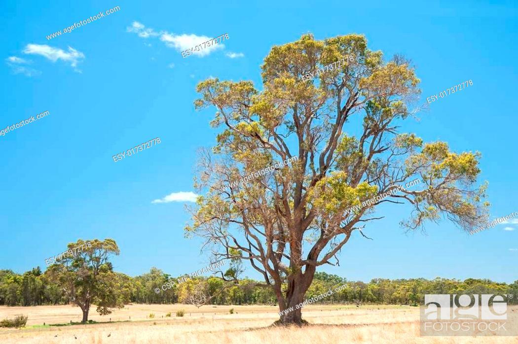 Imagen: Last Tree.