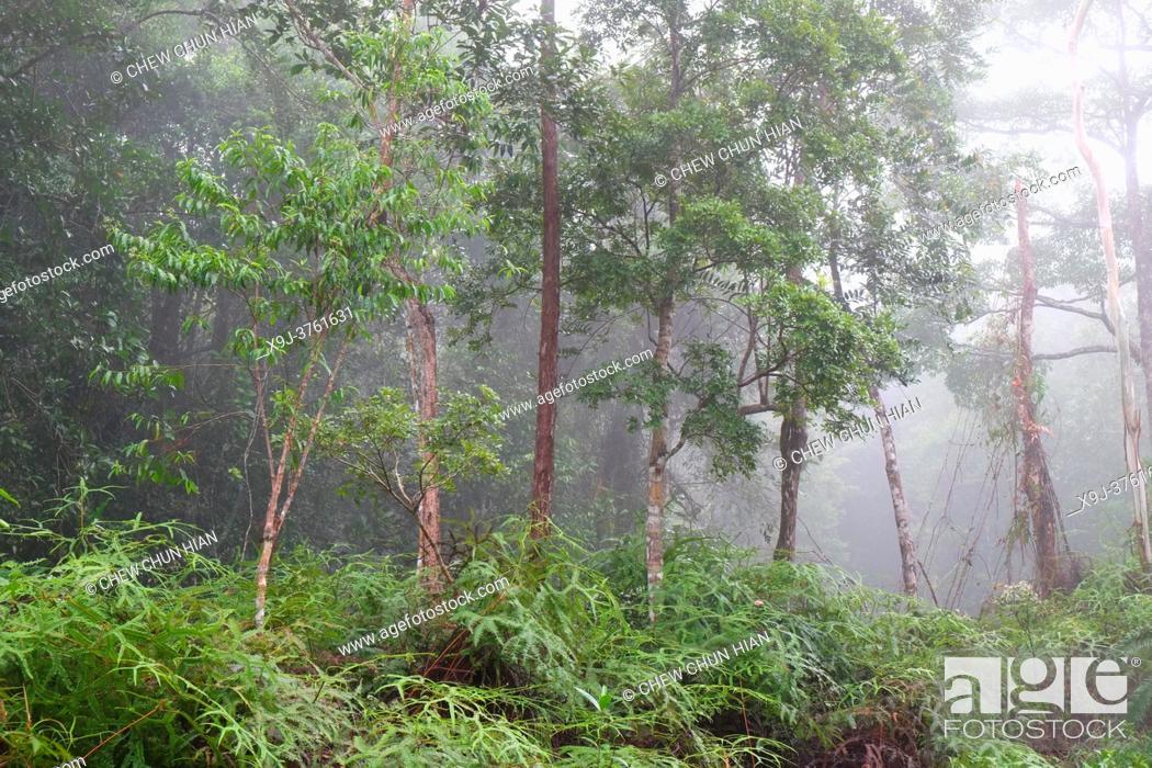 Stock Photo: Tropical rain forest lanscape, mount matang, kuching, sarawak, malaysia, borneo.