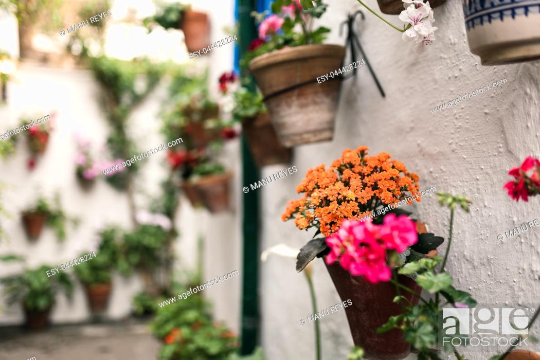 Stock Photo: Typical andalusian courtyard in Cordoba, Andalusia Spain with a lot of plants.
