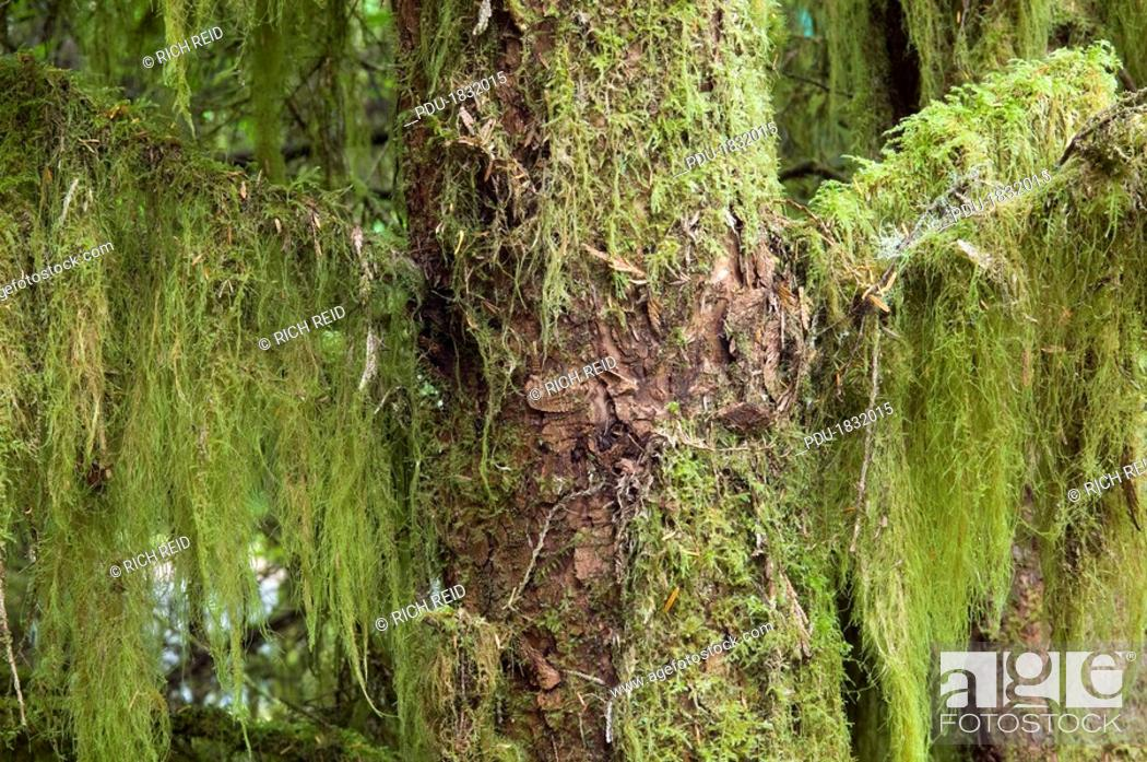 Stock Photo: Moss in a temperate rainforest at Green Point.