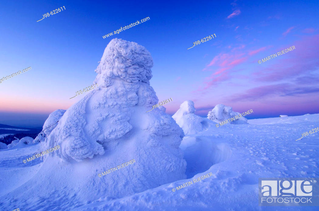 Stock Photo: Snow-covered Norway spruce trees (Picea abies) at sunrise. Brocken (Mountain), National Park Hochharz, Saxony-Anhalt, Germany, Europe.
