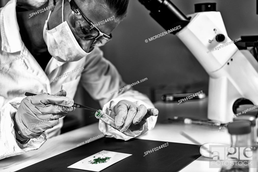 Stock Photo: Forensics. Drug laboratory technician examining suspicious matter.
