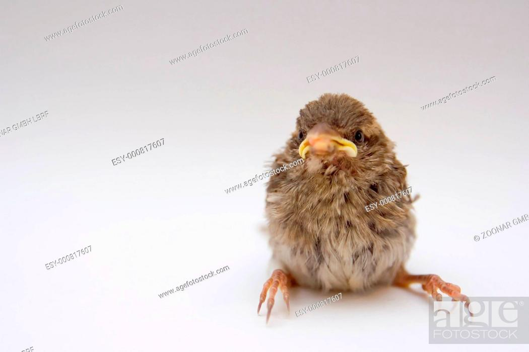 Stock Photo: little bird.