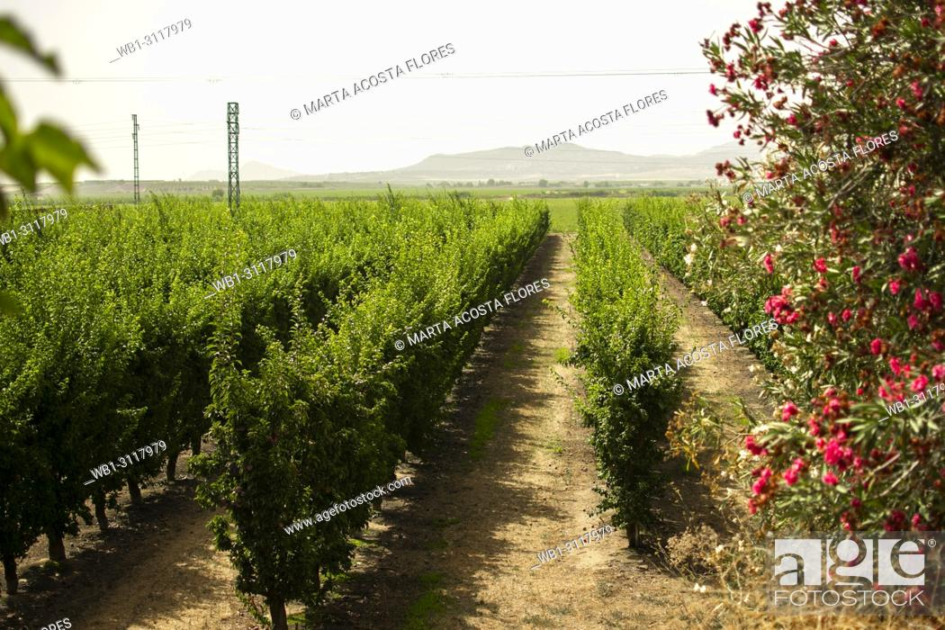 Imagen: A field of vineyards in the South of Spain, (Montijo, Extremadura).