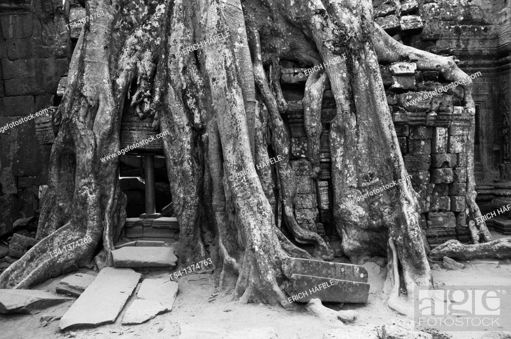 Stock Photo: Roots overgrow Ta Prohm temple in Angkor.