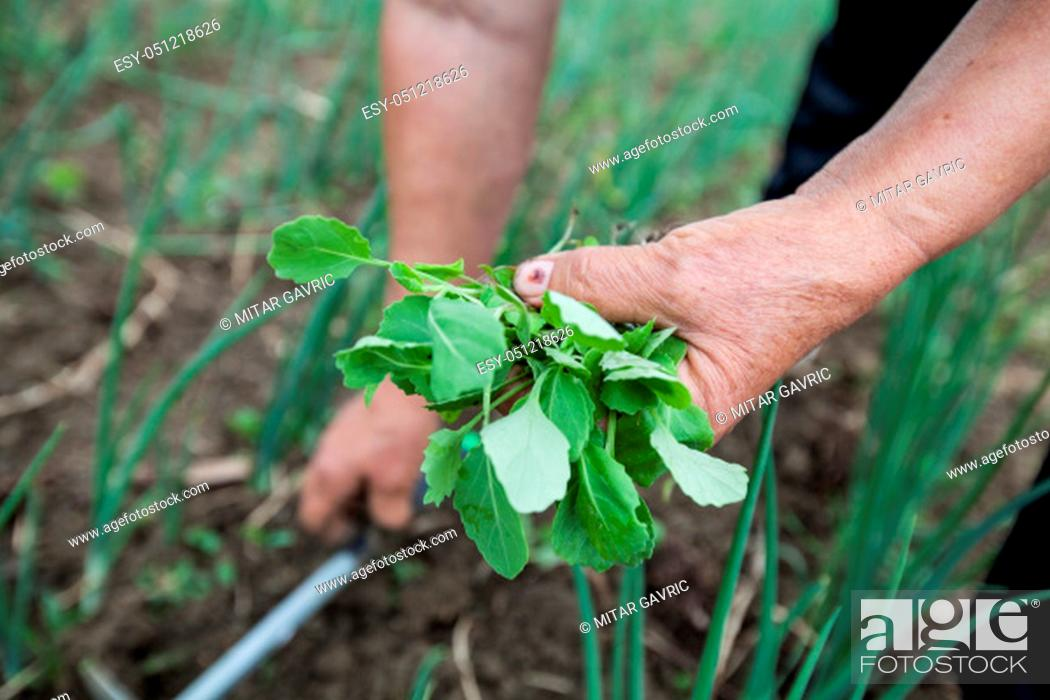 Stock Photo: Female Farmers Hand Planting Small Plant In Organic Garden.