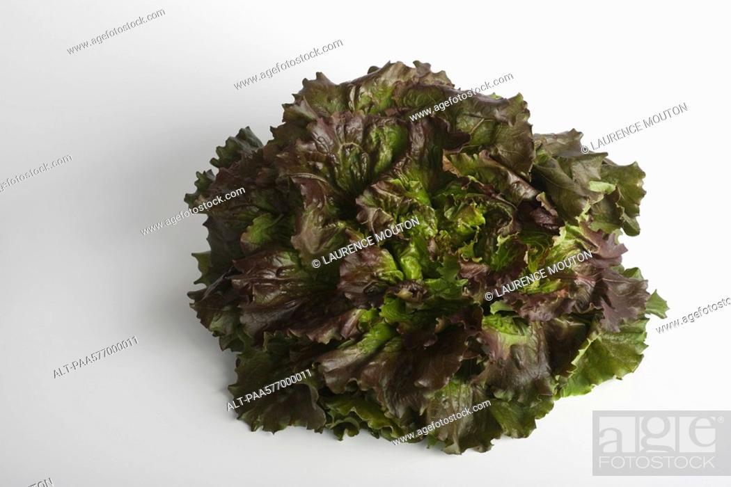 Stock Photo: Red Batavia lettuce.