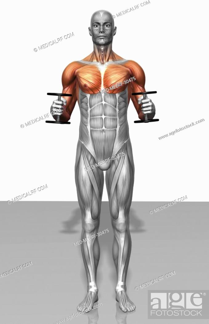 Stock Photo: Hammer curl exercise Part 2 of 2.