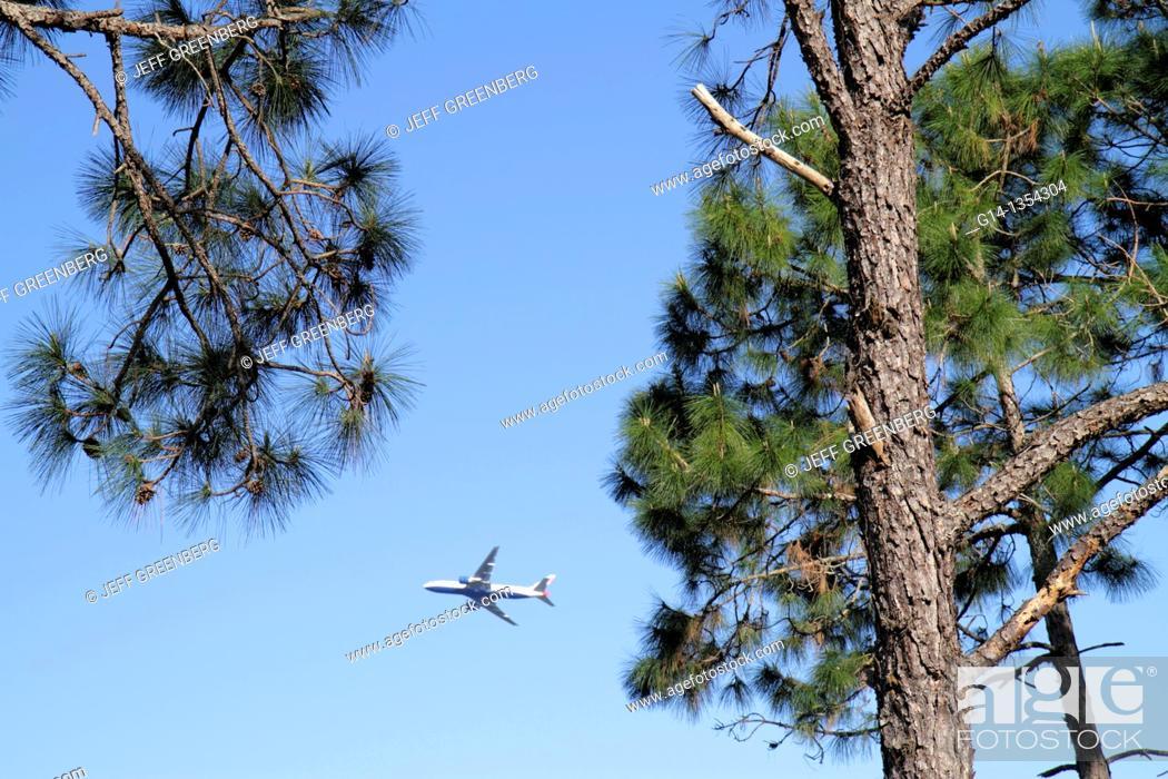 Stock Photo: Florida, Orlando, Orlando International Airport, pine tree, departing flight,.