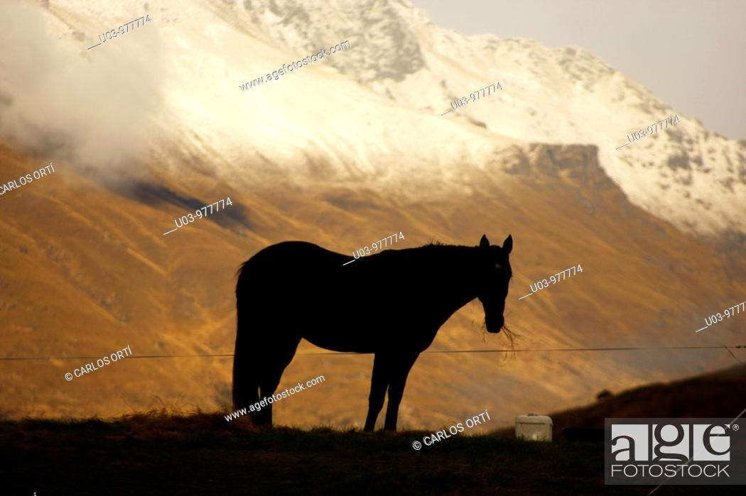 Stock Photo: Horse in the mountains of New Zealand.