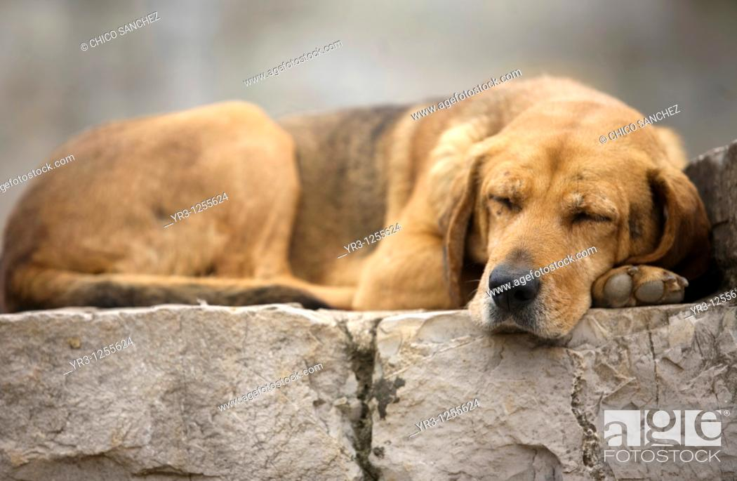 Stock Photo: A dog sleeps in Yohualichan on the outskirts of Cuetzalan del Progreso, Mexico. Cuetzalan is a small picturesque market town nestled in the hills of Mexico's.