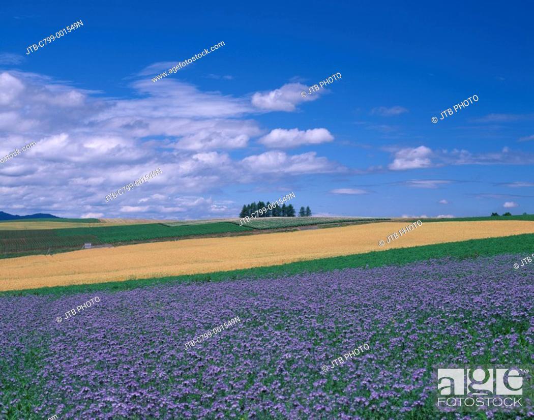 Stock Photo: hill of Shinei Biei, Kamikawa Hokkaido Japan Blue sky Tree Clouds Flower garden Field Prairie.