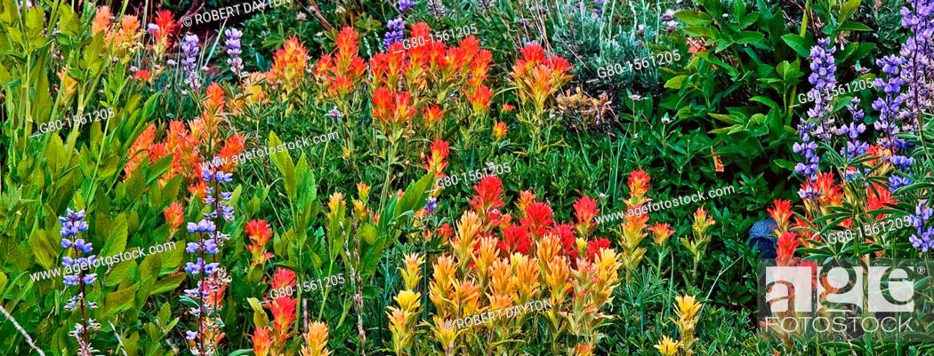 Stock Photo: Summer wildflowers in the Eldorado National Forest, California.