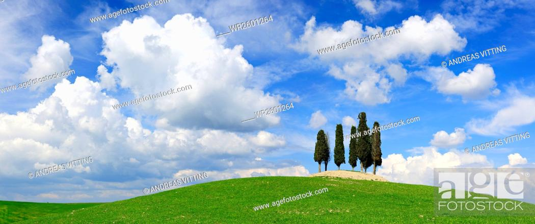 Imagen: Tuscan Landscape, cypress trees on hill under blue sky, San Giovanni d'Asso, Province Siena, Tuscany, Italy.