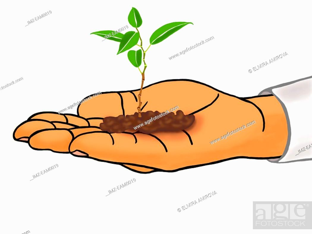 Stock Photo: A small seedling in a hand.