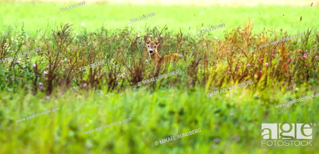 Stock Photo: deer.