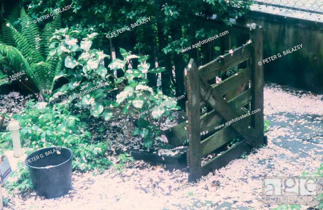 Stock Photo: Garden.