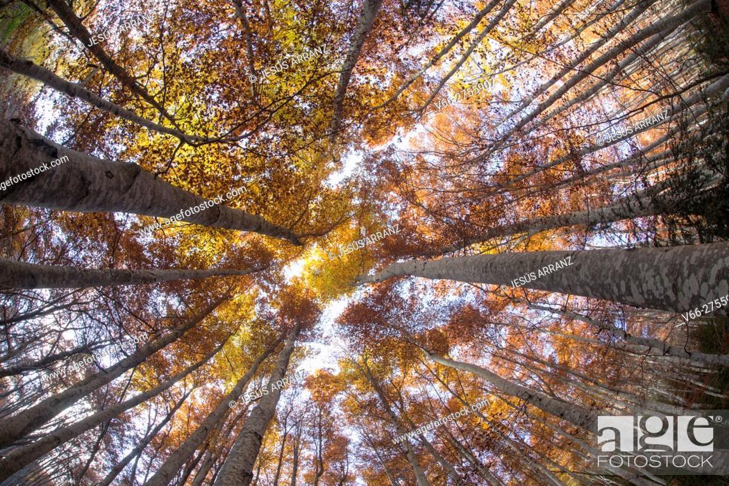 Imagen: Forest Betato.