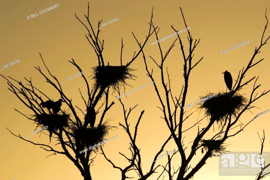 Stock Photo: Birds nesting - Tres Rios Wetlands - Phoenix, Arizona.