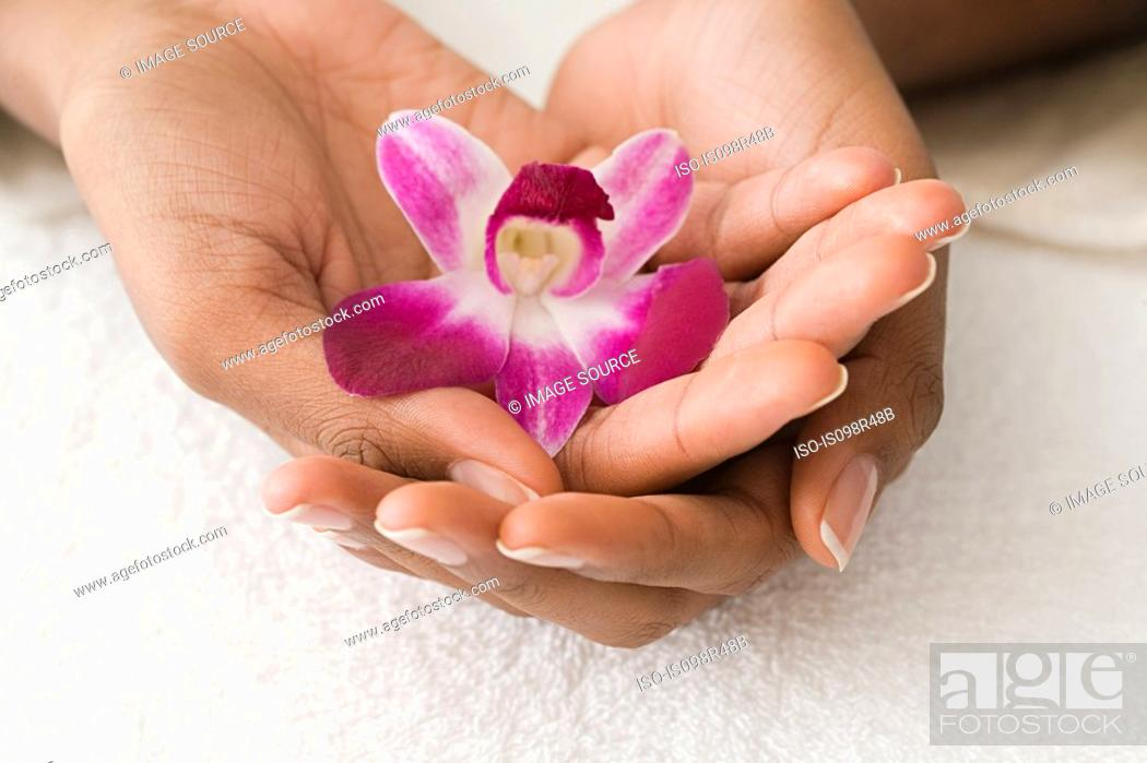 Stock Photo: Hands holding an orchid.