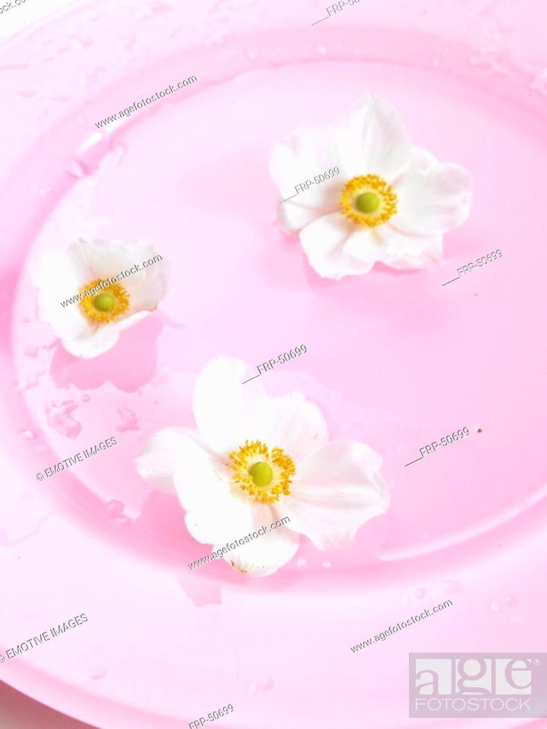 Stock Photo: Primrose blossoms on a pink plate.