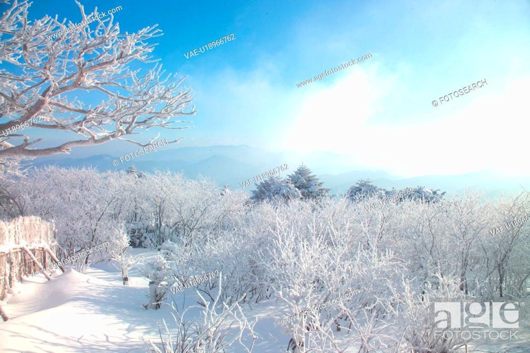 Stock Photo: scene, snow, sky, winter, mountain, view, tree.