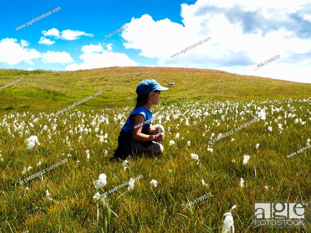 Stock Photo: Child in a meadow of flowers cotton-grass, Trepalle, Livigno, Sondrio, Lombardy, Italy.