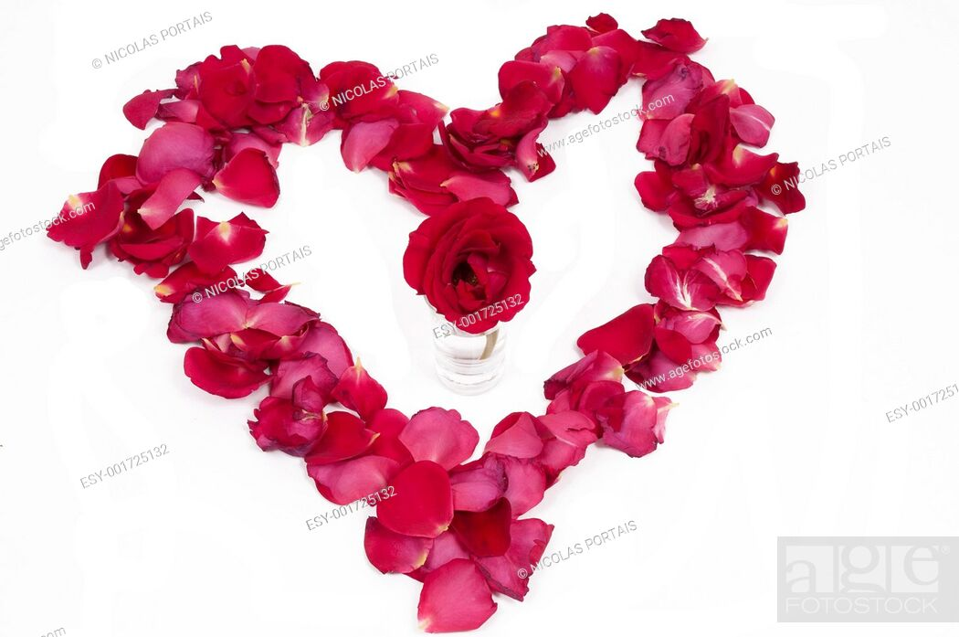 Stock Photo: Red rose in a petal heart.