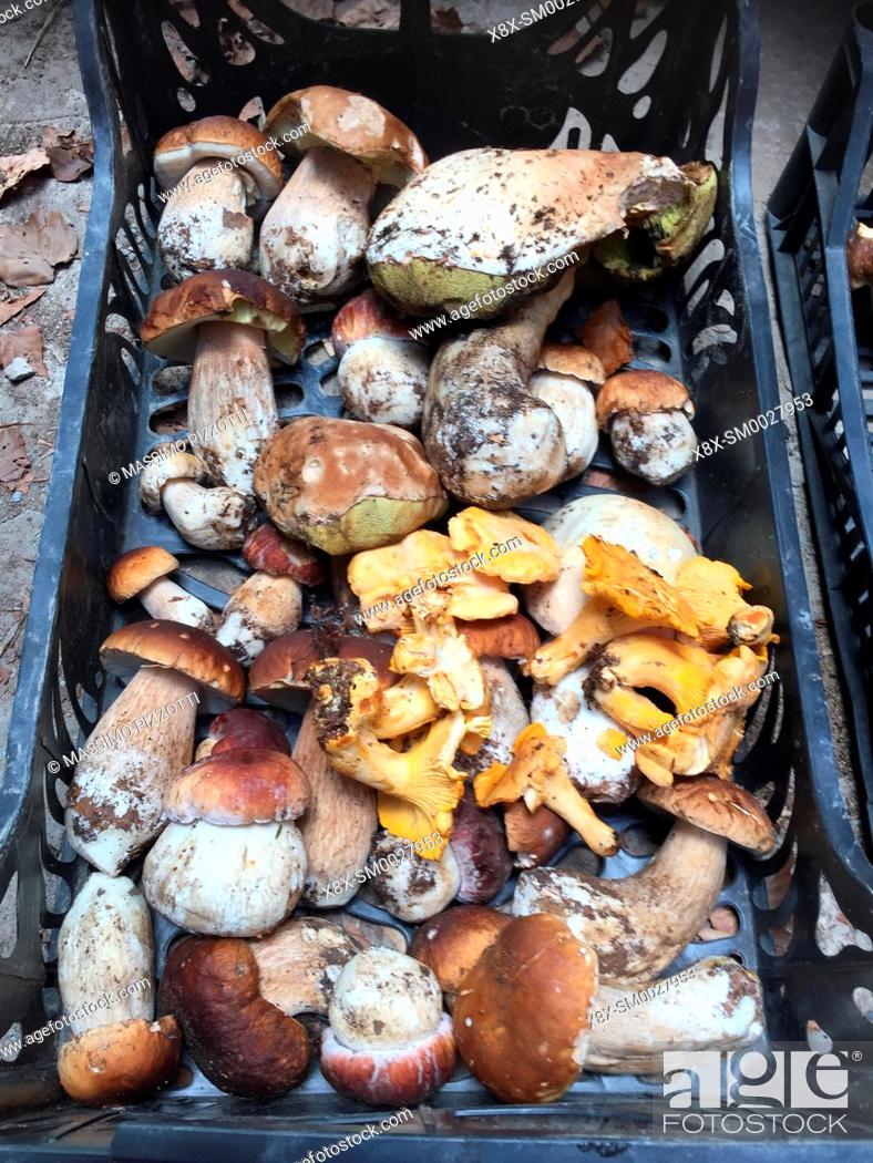 Stock Photo: Fresh porcini mushrooms (boletus edulis) in the boxes, Italy.