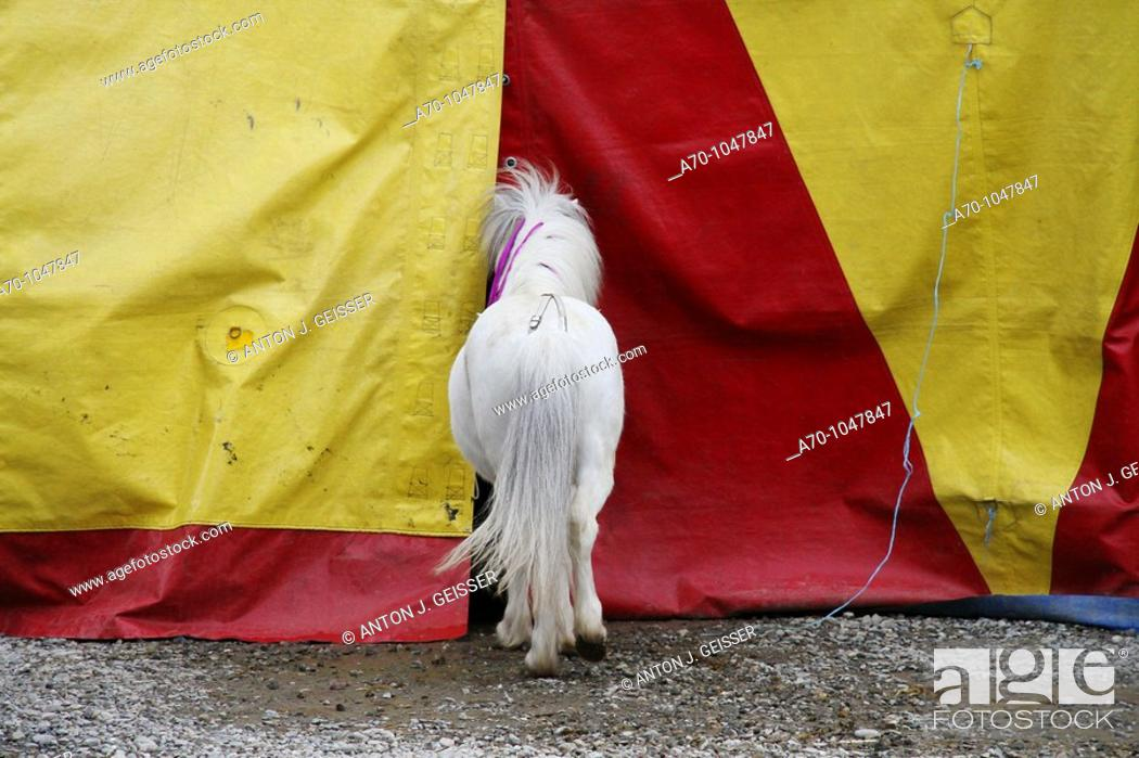 Stock Photo: Weith Horse Circus Tent.