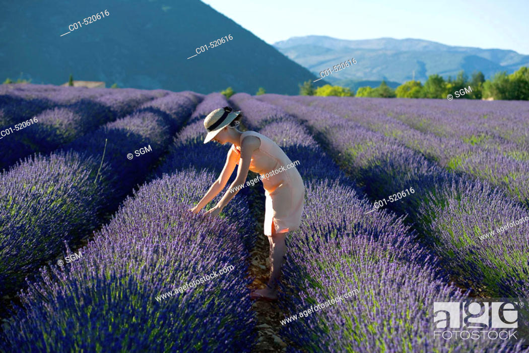 Stock Photo: Young woman in blooming lavender field. Provence, France.